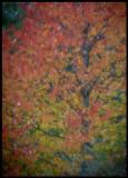 Autumcolors Öland