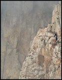 Griffon Vulture Cliff