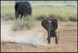 Elephant boy playing…..