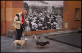 Walking the dogs in Perpignan - Rwanda in memory