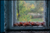 Old window with autumn leafs