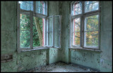 Forest outside windows