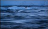 Dipper in Blue hour - Kiruna
