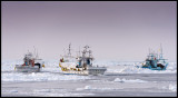 Fishing boats in the pack-ice between Japan and Russia