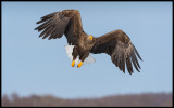 Adult eagle at Lake Furen