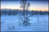 Morning light along the road to Nikkaluokta