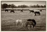 Horses near Bårby