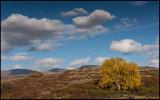 Autumn colors on Dovrefjell