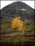 Autumn mountain near Laerdal