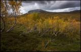 Autumn mountain near Laerdal - Norway