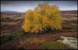 Autumn colors at Dovrefjell