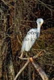 Egret 32