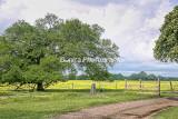 St Tammany Parish Landscapes