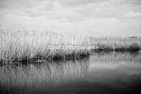 Marsh-12-2.jpg