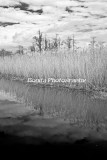 Marsh-22-2.jpg
