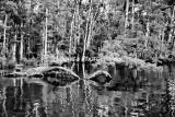 RivSwamp-11BW.jpg