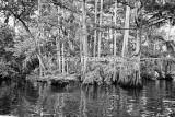 RivSwamp-13BW.jpg