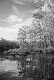 RivSwamp-5 BW.jpg