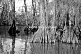 River-113.jpg