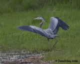 Cranes and Heron Gallery