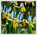 Magic Flora
