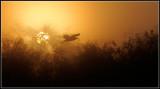 wading_birds