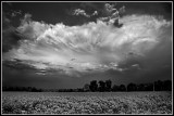 Clouds Over Cotton Field
