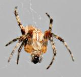 spider_