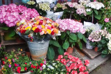 Flower shop in Auvers-sur-Oise