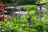 The famous Lily Pond