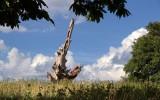 Charlecote Park - National Trust