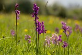Draycote Meadow & Surroundings