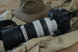Canon 7D Mark II with 100-400L IS II