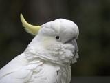 Australian Parrots and Cockatoos