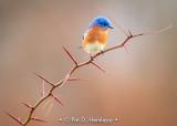 Bluebird alone