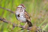 Sparrow in sun