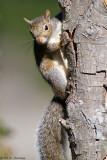 Squirrel in sun