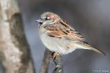 Sparrow profile