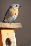 Bluebird at home