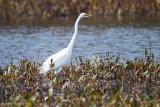 Egret and plants