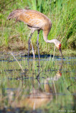 Crane reflection