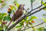 Singing in tree