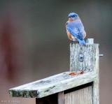 On a nesting box
