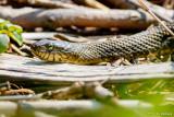 Snake and limbs
