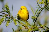 Posing Warbler