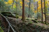 Forest hillside