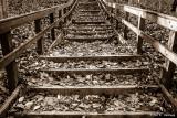 Leaf-covered steps