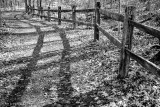 Fence and shadows - B&W