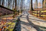 Shadows on a trail