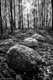 Rocks in woods